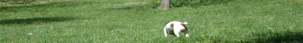 Weblog SOFTPAE header image 2